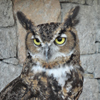 horned owl - A Higher Way -  The Love Foundation